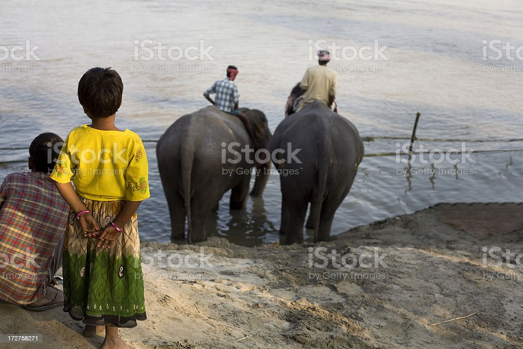 Elephants in Gange stock photo
