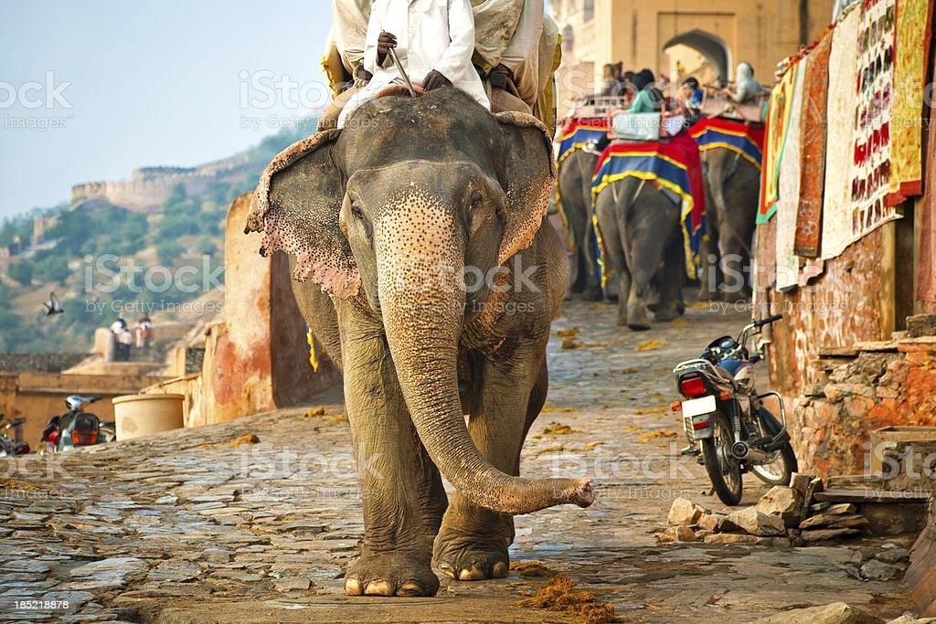 Elephants in India stock photo