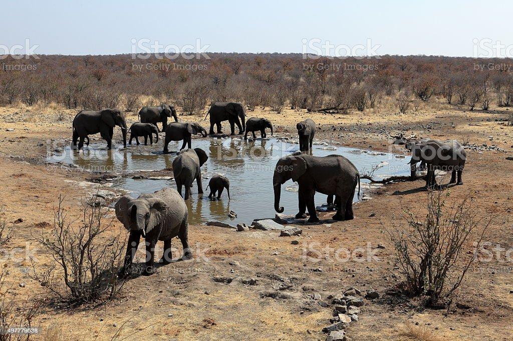 Elephants in the Etosha National Park in Namibia stock photo