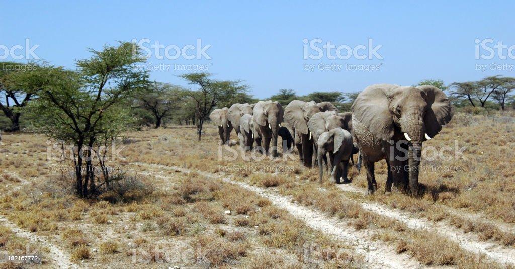 Elephants Marching royalty-free stock photo