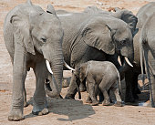 Elephants surround a waterhole in Hwange National park
