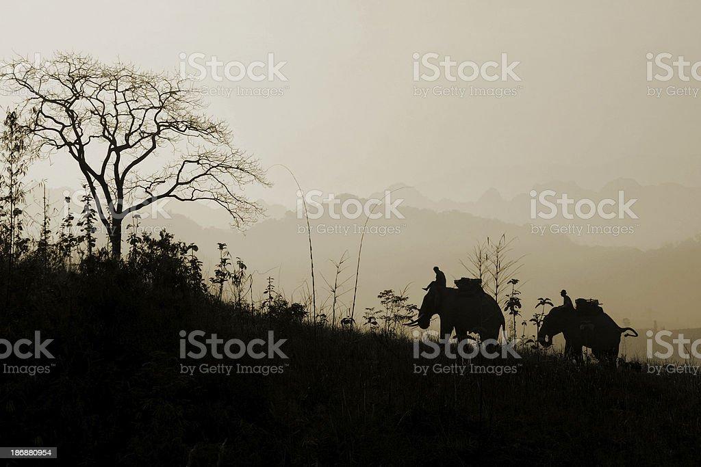 Elephants Trekking stock photo