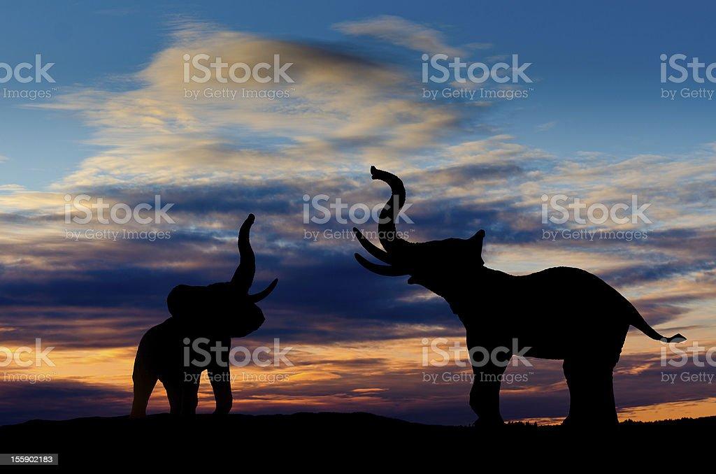Elephants trumpeting stock photo