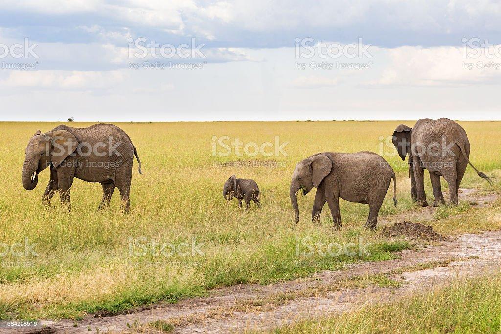 Elephants with a small calf on grass savanna stock photo