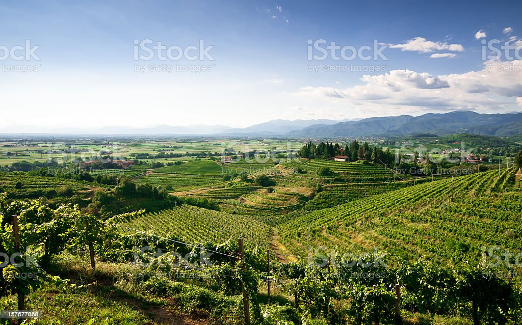 Elevated landscape view of vineyards stock photo