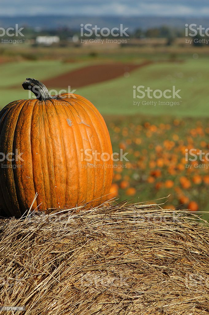 elevated pumpkin stock photo