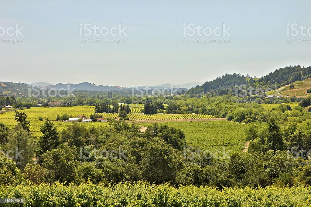 Elevated view of Sonoma Valley wines growing Ca stock photo