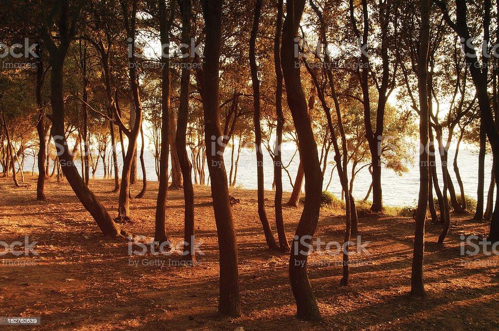 Elfin woodland stock photo