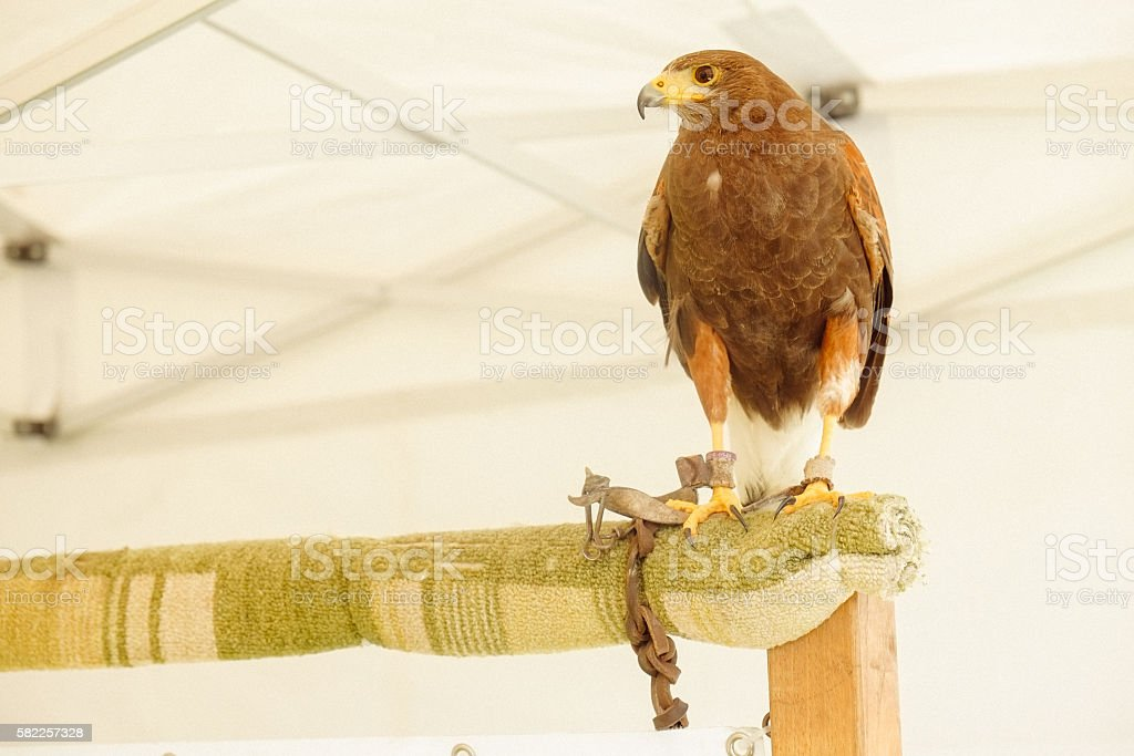 Eli Lilly Italy. 140th Anniversary party. Bird show. stock photo