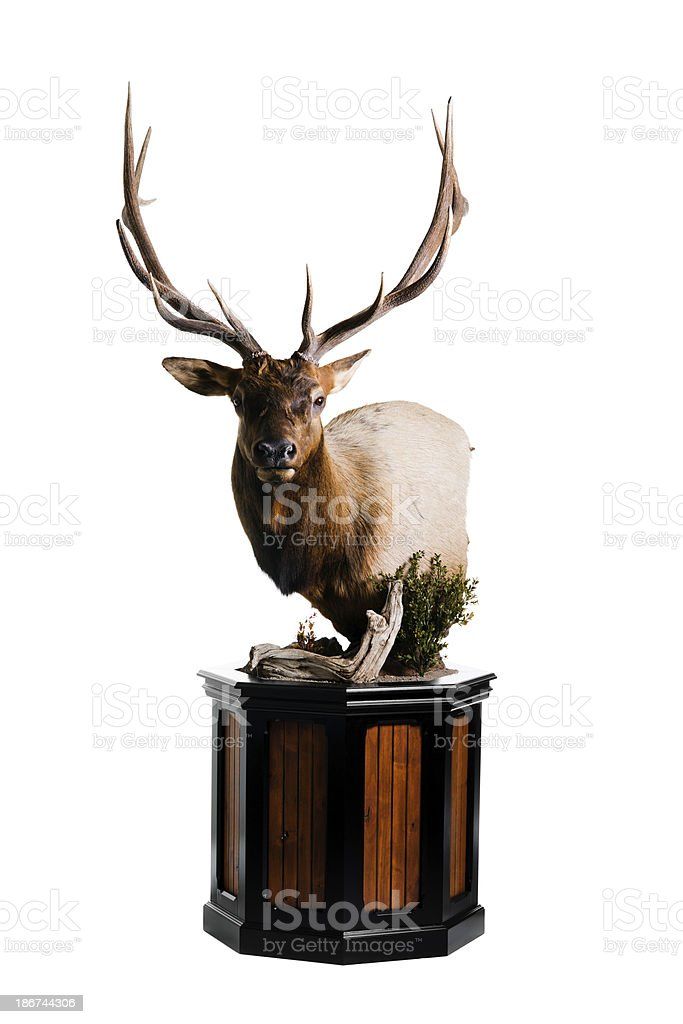 Elk Head royalty-free stock photo