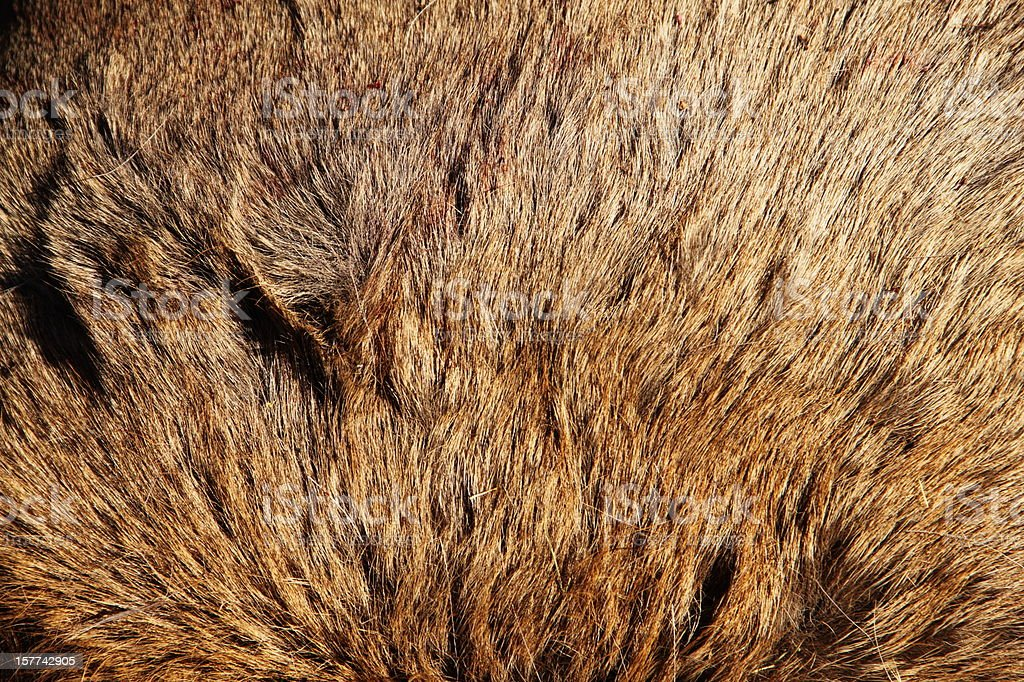 Elk Hide Close up royalty-free stock photo