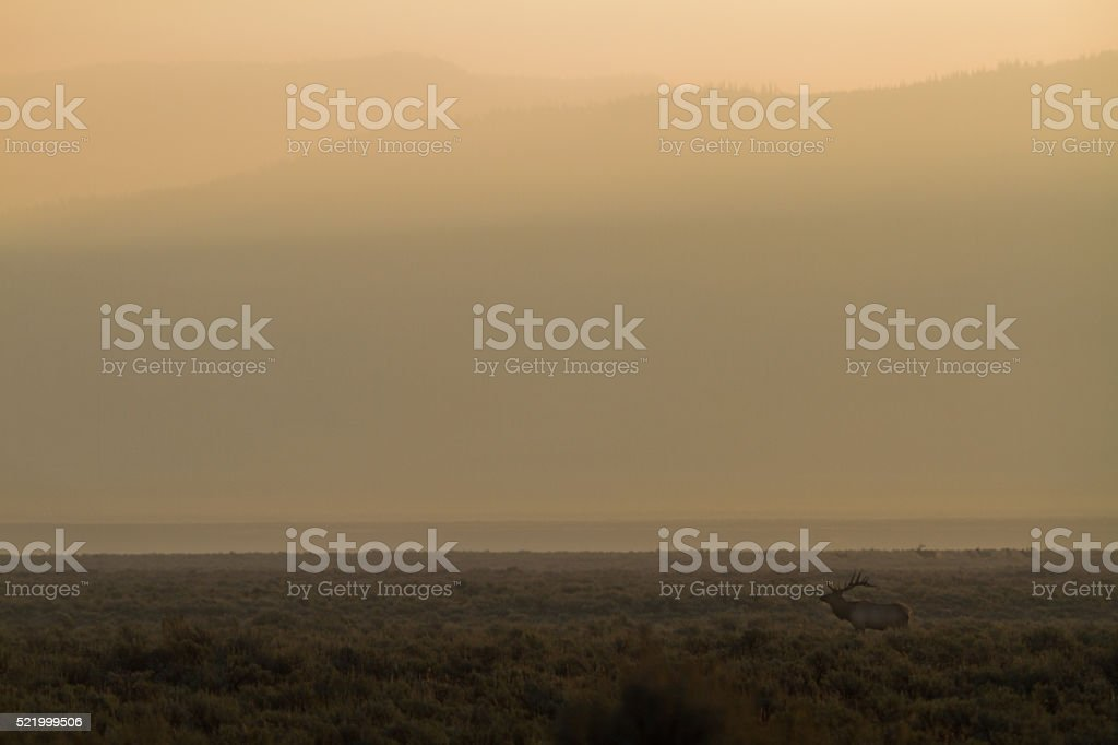 Elk in Smoke stock photo