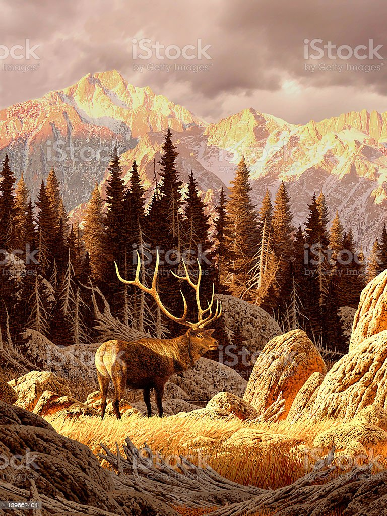 Elk in the Rockies stock photo