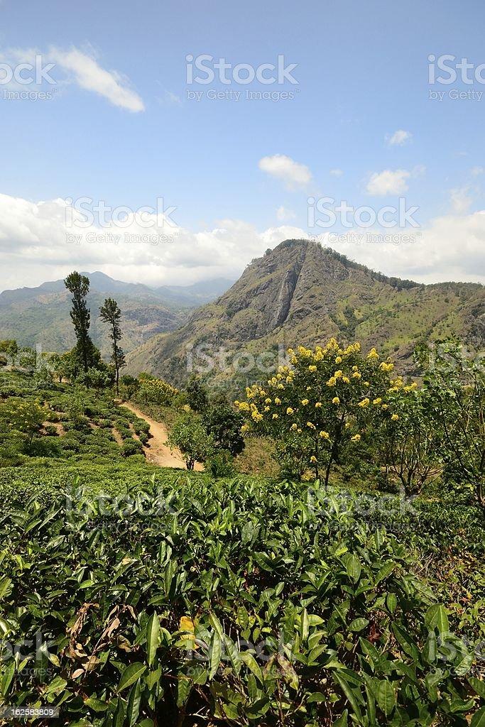 Ella Rock and tea crops, Sri Lanka royalty-free stock photo