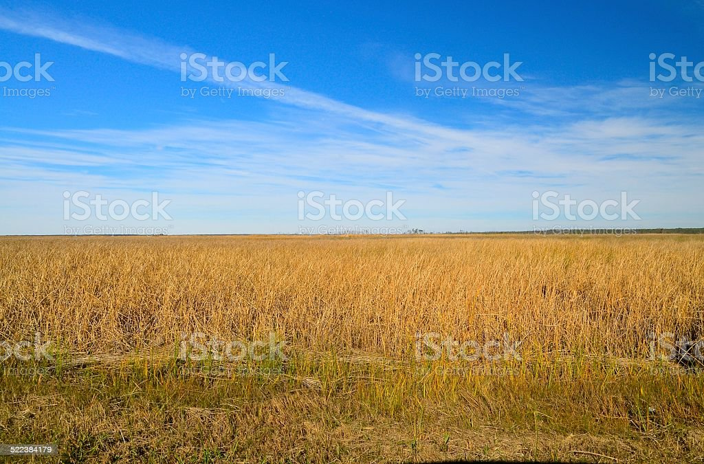 Elliott Island Savanna Landscape stock photo