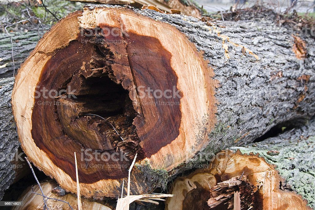 Elm Disease stock photo