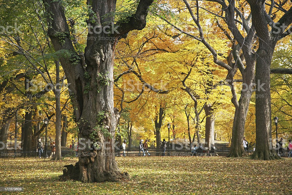 Elm Forest In Autumn stock photo