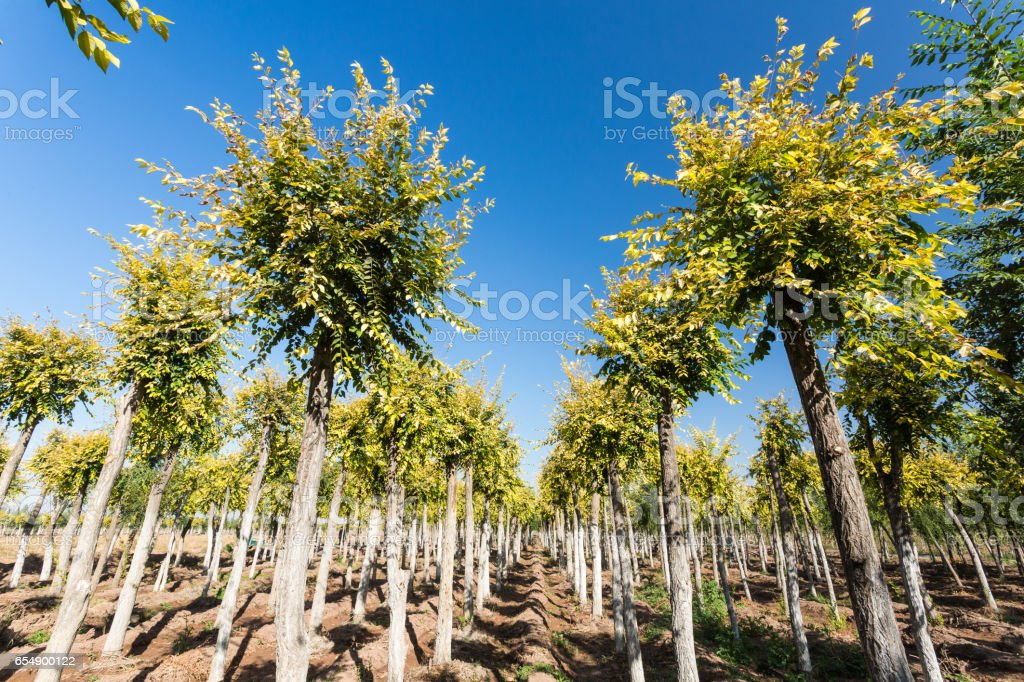 Elm forest stock photo