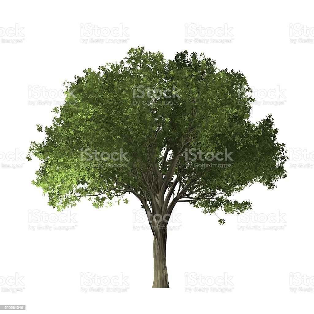 Elm tree - digital painting stock photo
