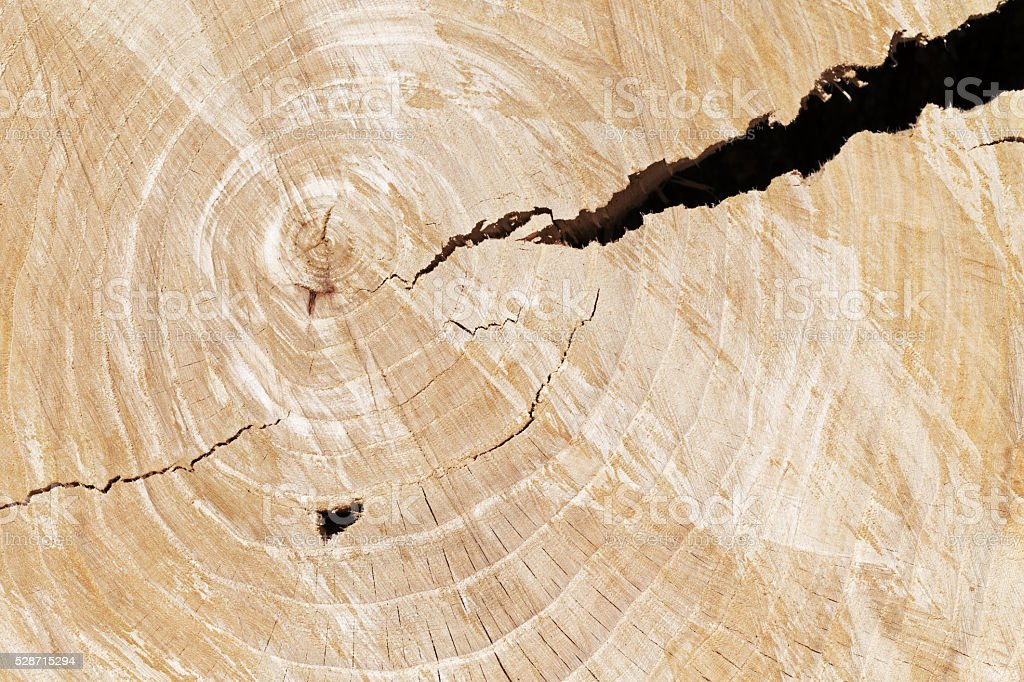 Elm Tree Rings with Cracks stock photo