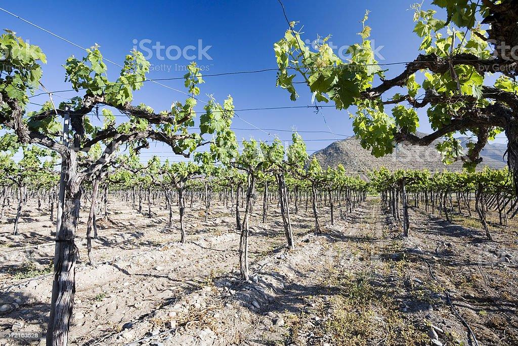 Elqui Valley Vineyard, Chile stock photo