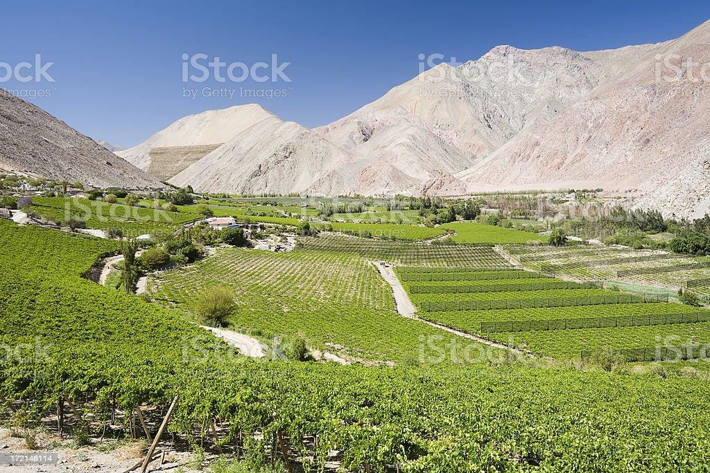 Elqui Valley Vineyards stock photo