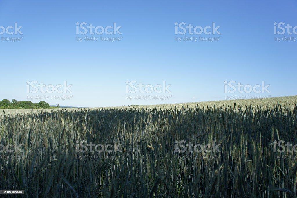 Elysian fields stock photo
