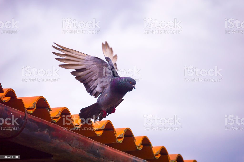 Embarkation dove to the sky... stock photo
