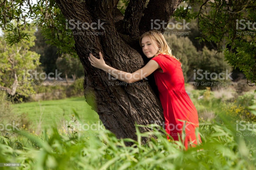 embracing trees stock photo