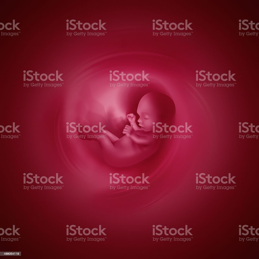 Embryo stock photo