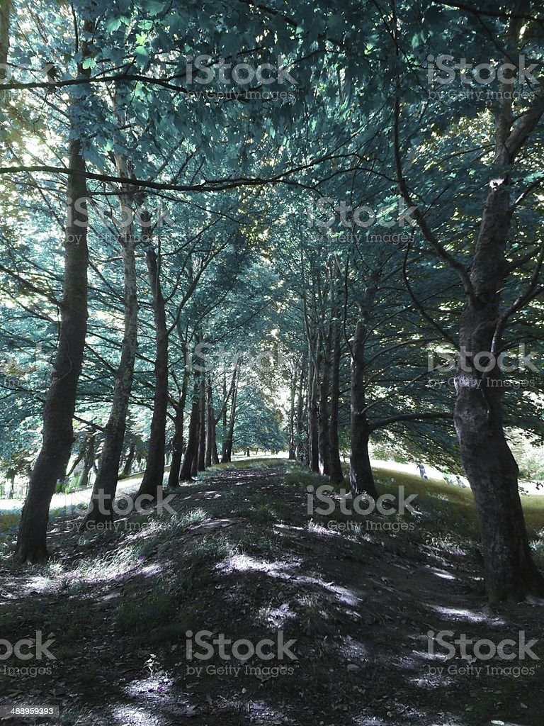 Emerald forest royalty-free stock photo