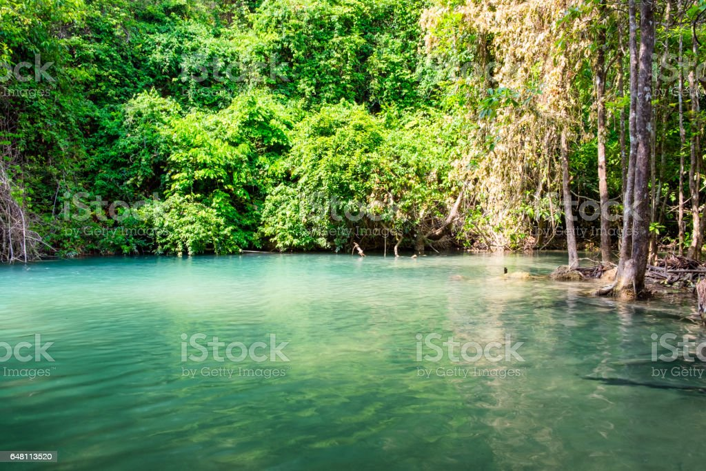 Emerald pond in tropical forest stock photo