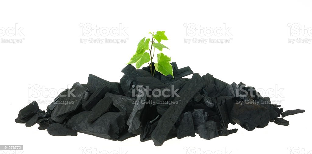 emerging from it's own ashes stock photo