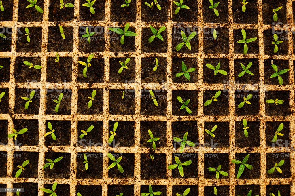 Emerging Seeds In View From Above stock photo