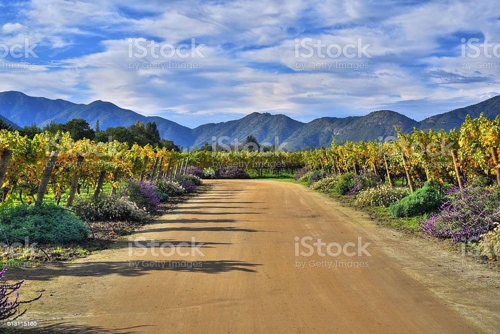 Emiliana Vineyards stock photo