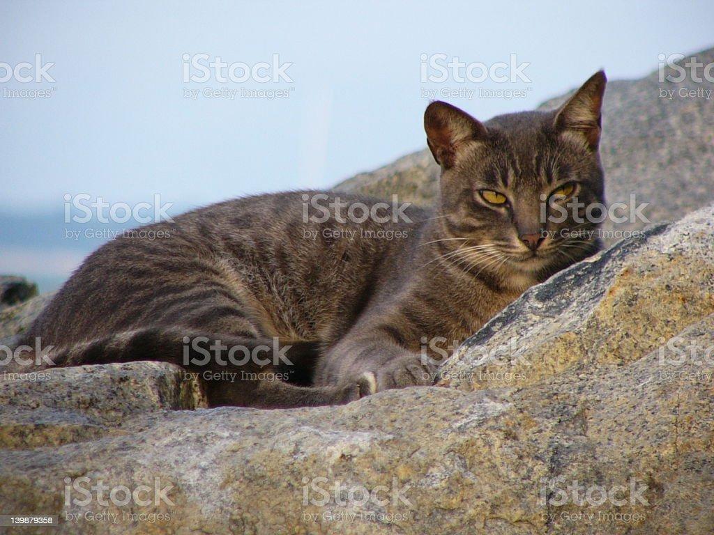 Emotional Cat royalty-free stock photo