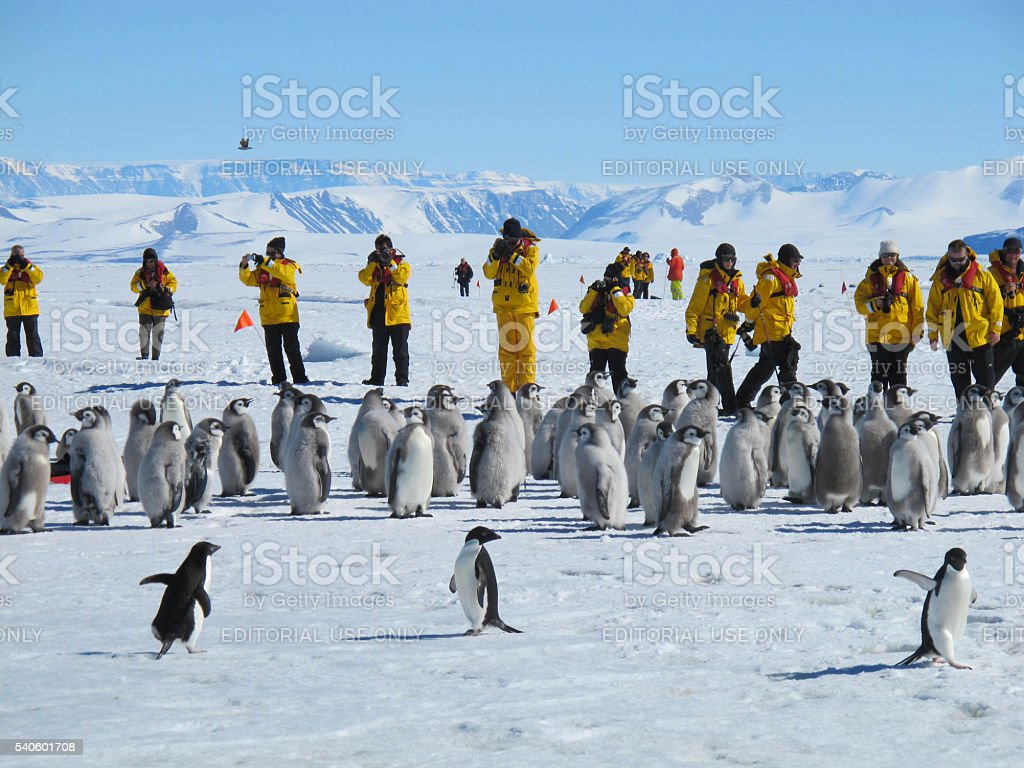Emperor Penguins, Adelie Penguins and Tourists stock photo