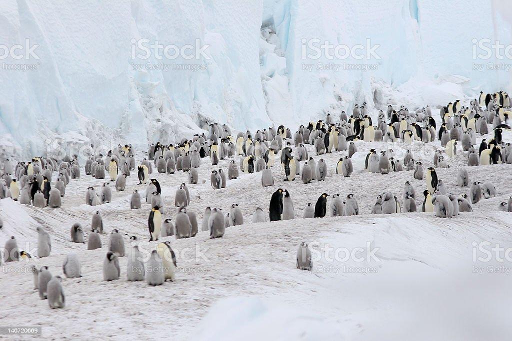 Emperor Penguins On Ice stock photo