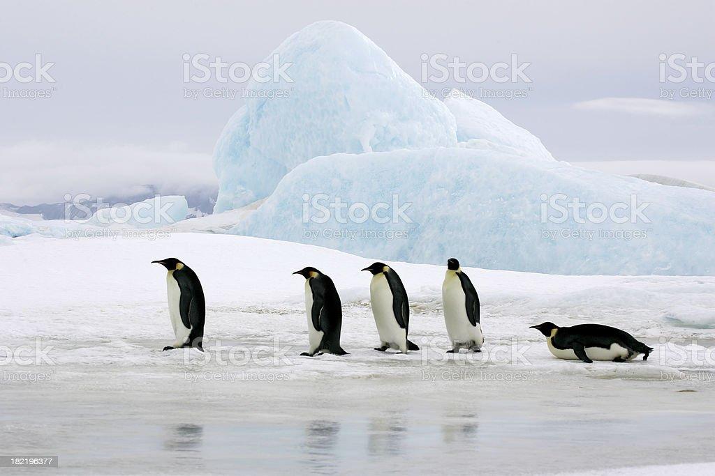 Emperors On Ice stock photo