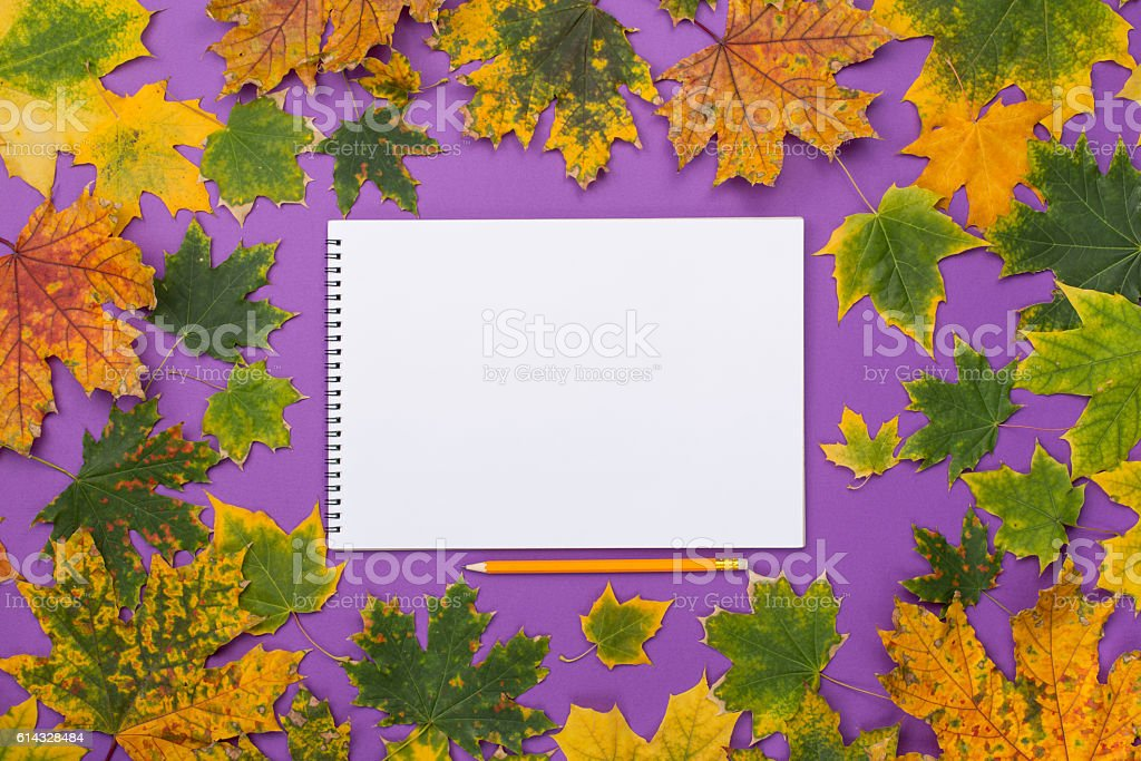 Empty album in the frame of colorful autumn leaves stock photo