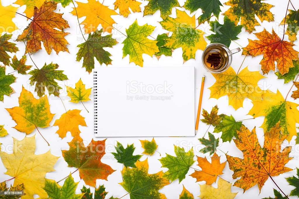 Empty album with tea in the frame of autumn leaves stock photo