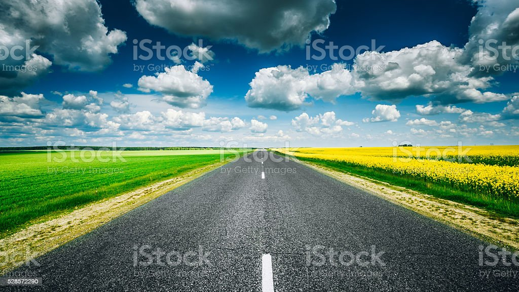Empty Asphalt Countryside Road Through Fields With Yellow Flowering...