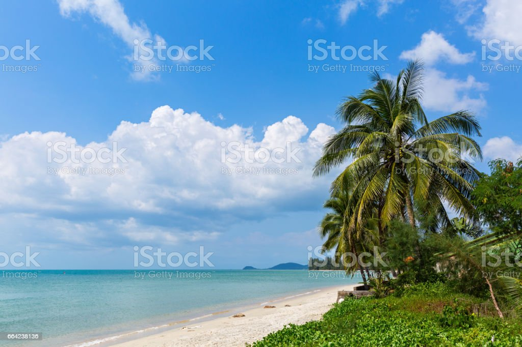 Empty beach and palm trees stock photo