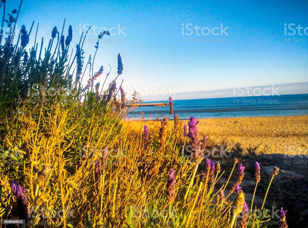 Empty beach in Cambrils (Spain) stock photo