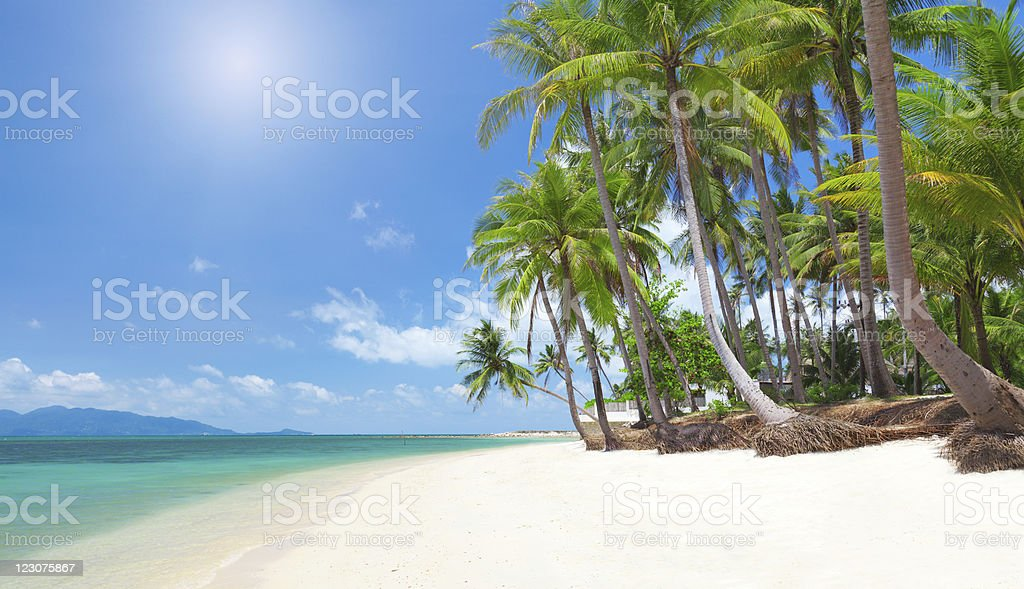 Empty beach with coconut palm trees and turquoise sea stock photo