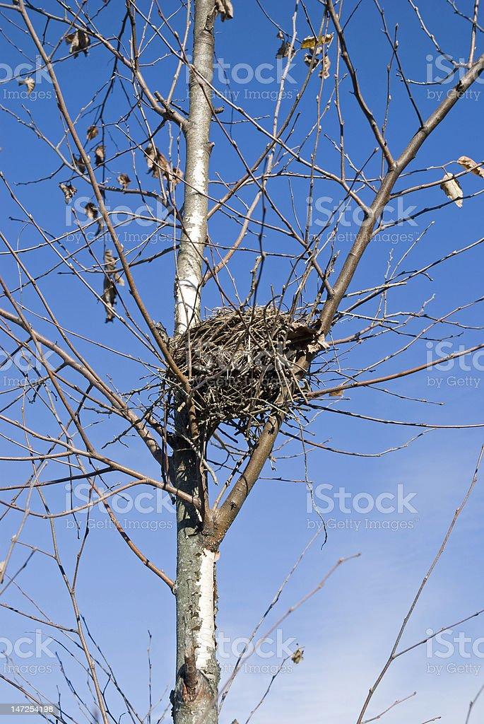 empty bird nest royalty-free stock photo