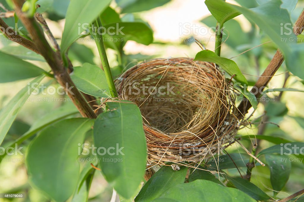 empty bird nest stock photo