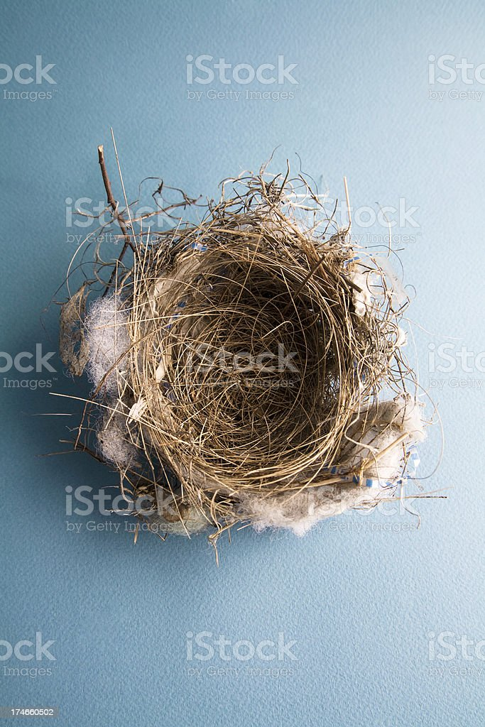 Empty Bird's Nest On Blue stock photo