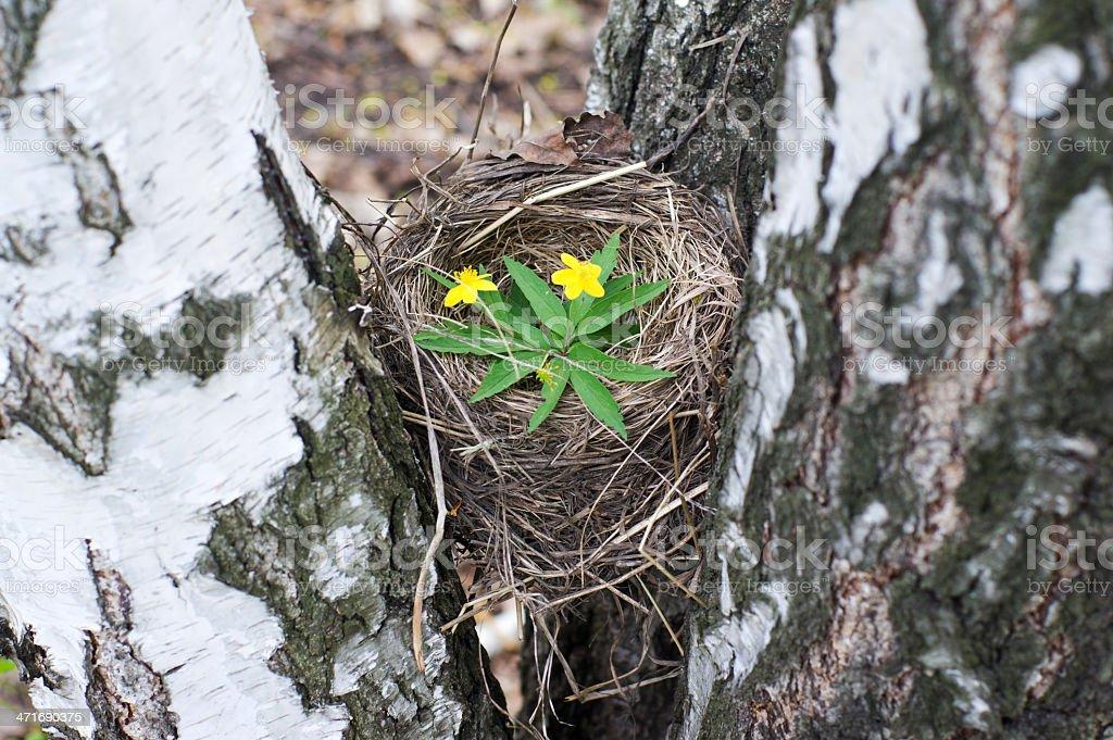 Empty bird's nest royalty-free stock photo