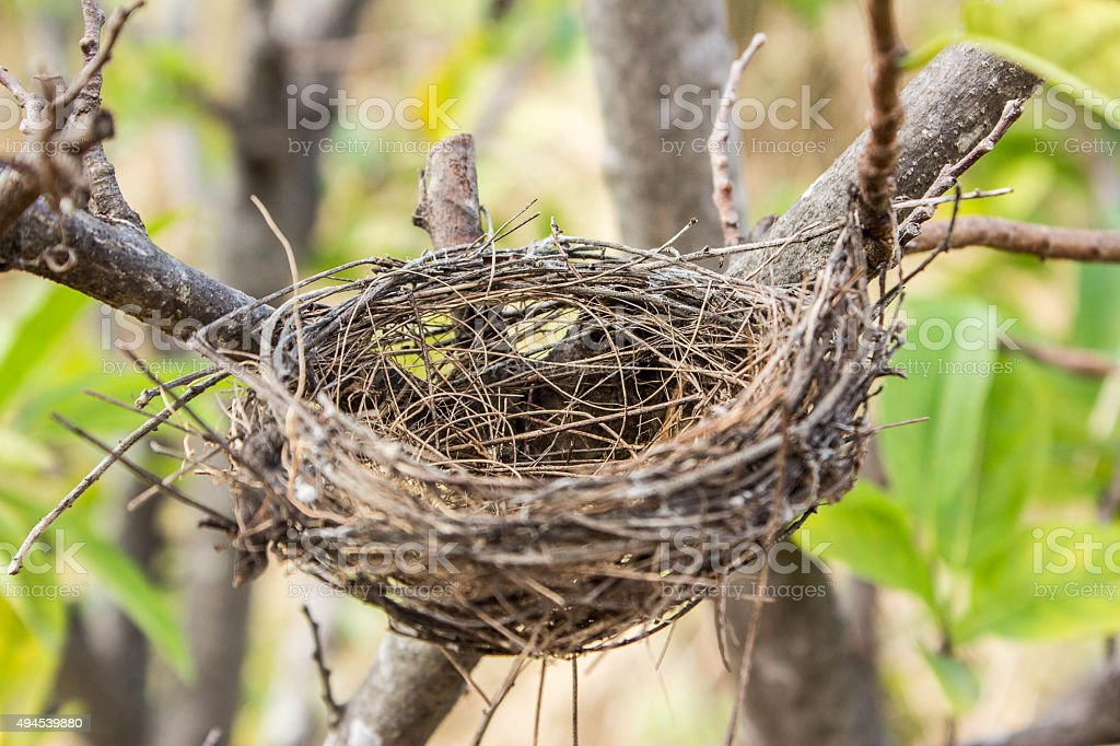 empty bird's nest stock photo